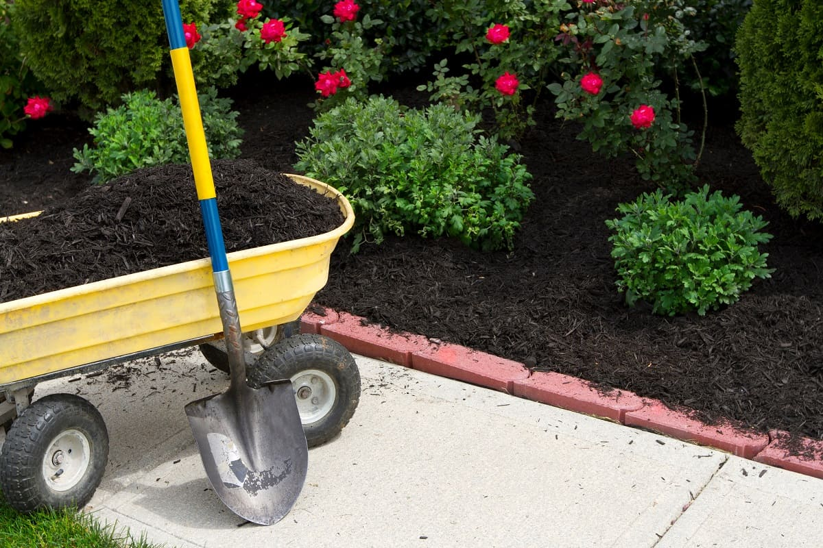 Pros and Cons of Black Mulch
