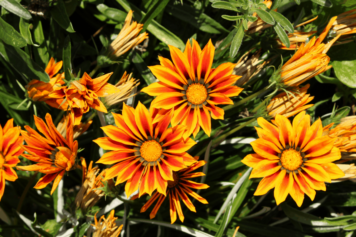 Flowers That Survive In Heat