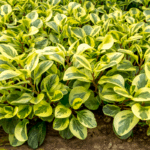 Best Outdoor Plants That Don't Need Sunlight